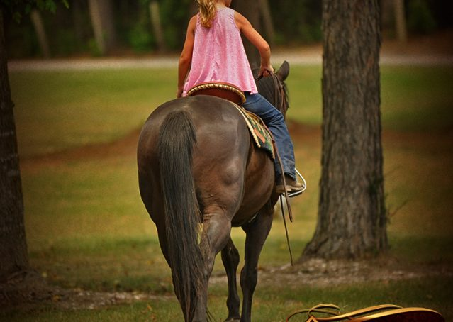 010-Jett-Black-Quarter-Horse-Gelding-For-Sale