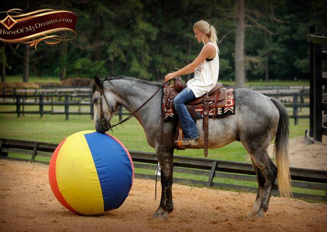 010-Steele-Gray-Quarter-Horse-Gelding-For-Sale