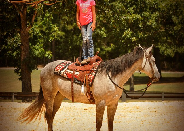 011-Milagro-Gray-AQHA-Gelding-For-Sale
