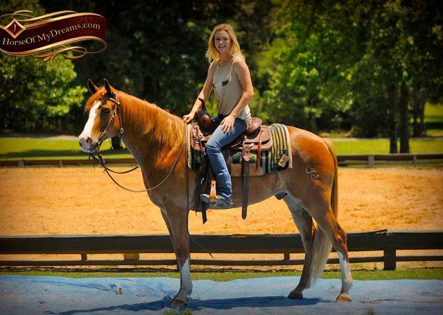 011-Remi-Sorrel-Quarter-Horse_Gelding-For-Sale