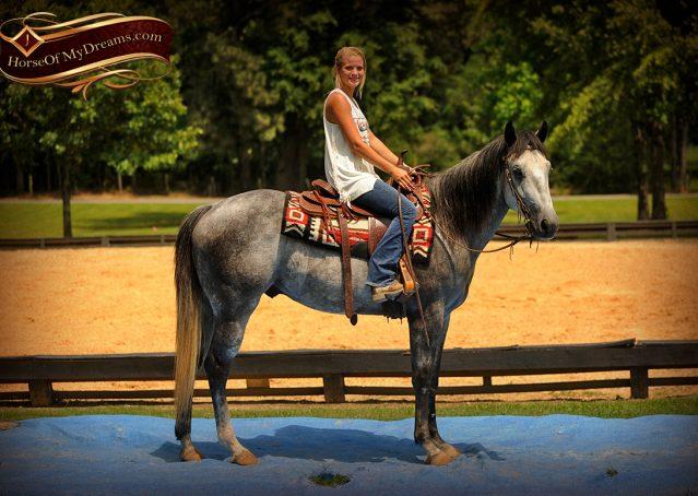 011-Steele-Gray-Quarter-Horse-Gelding-For-Sale