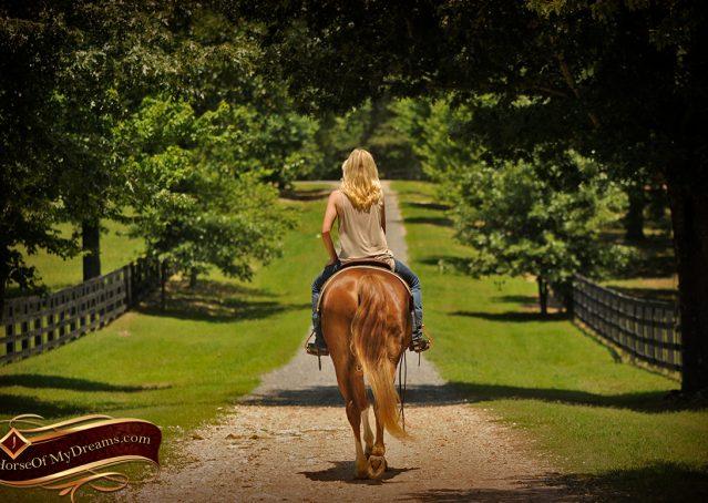 012-Remi-Sorrel-Quarter-Horse_Gelding-For-Sale