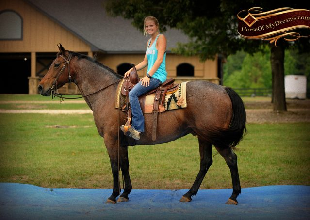 013-Jordan-Bay-roan-Gelding-For-Sale