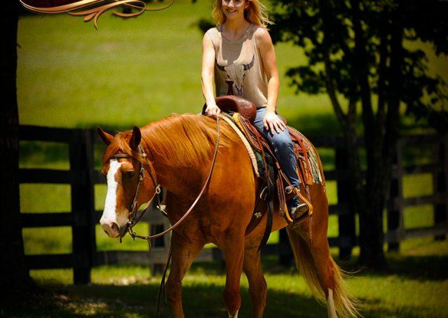 013-Remi-Sorrel-Quarter-Horse_Gelding-For-Sale
