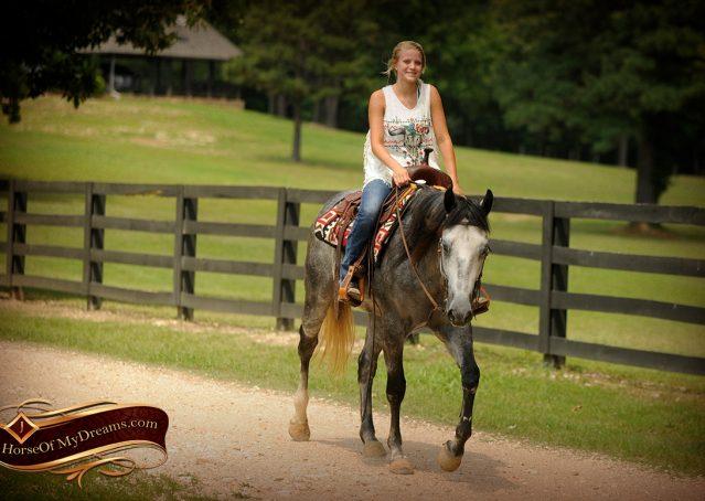 013-Steele-Gray-Quarter-Horse-Gelding-For-Sale
