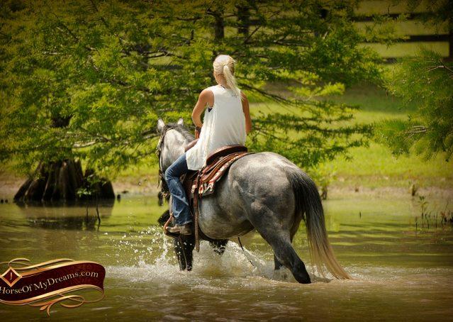 014-Steele-Gray-Quarter-Horse-Gelding-For-Sale