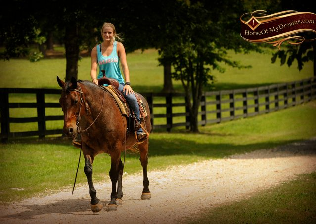 015-Jordan-Bay-roan-Gelding-For-Sale