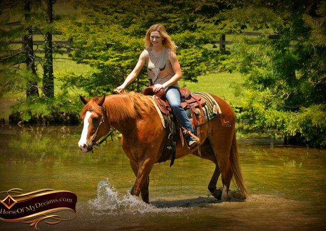 015-Remi-Sorrel-Quarter-Horse_Gelding-For-Sale