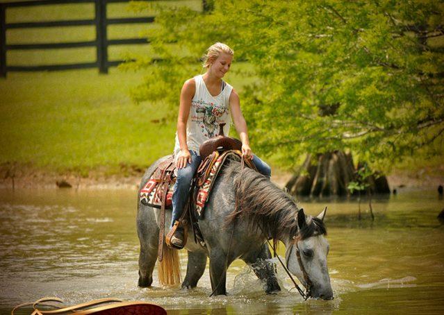 015-Steele-Gray-Quarter-Horse-Gelding-For-Sale