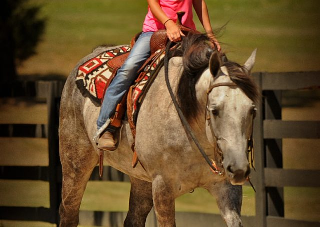 016-Milagro-Gray-AQHA-Gelding-For-Sale