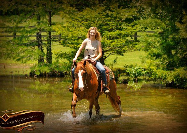 016-Remi-Sorrel-Quarter-Horse_Gelding-For-Sale