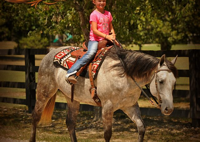 017-Milagro-Gray-AQHA-Gelding-For-Sale