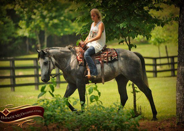 017-Steele-Gray-Quarter-Horse-Gelding-For-Sale