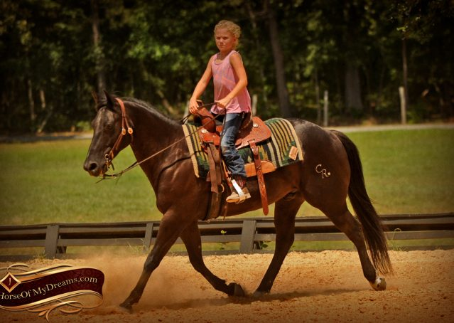 018-Jett-Black-Quarter-Horse-Gelding-For-Sale