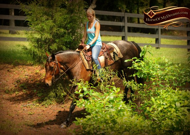 018-Jordan-Bay-roan-Gelding-For-Sale