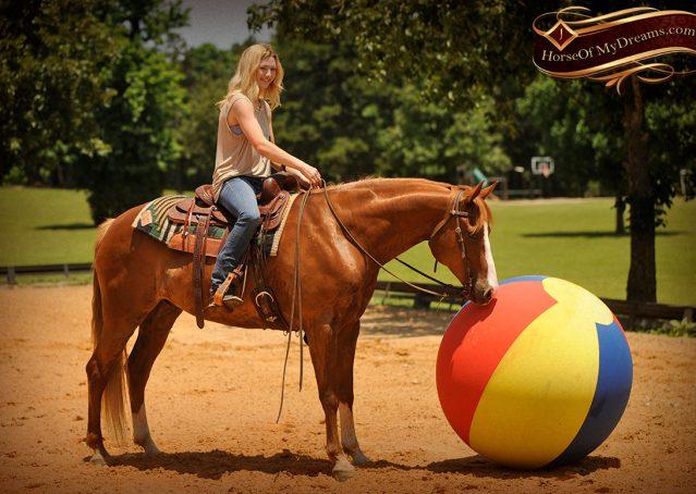 018-Remi-Sorrel-Quarter-Horse_Gelding-For-Sale