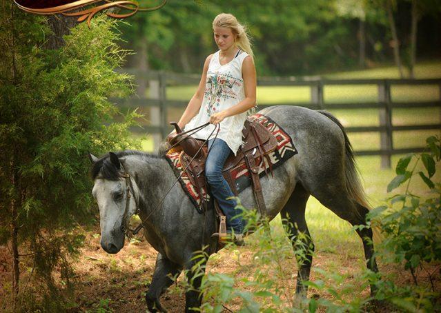 018-Steele-Gray-Quarter-Horse-Gelding-For-Sale