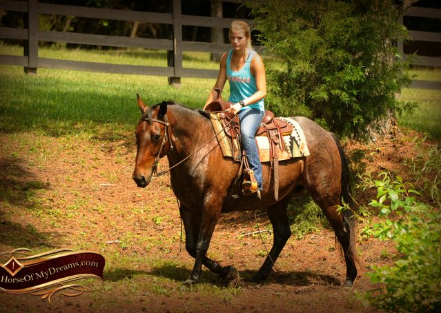 019-Jordan-Bay-roan-Gelding-For-Sale