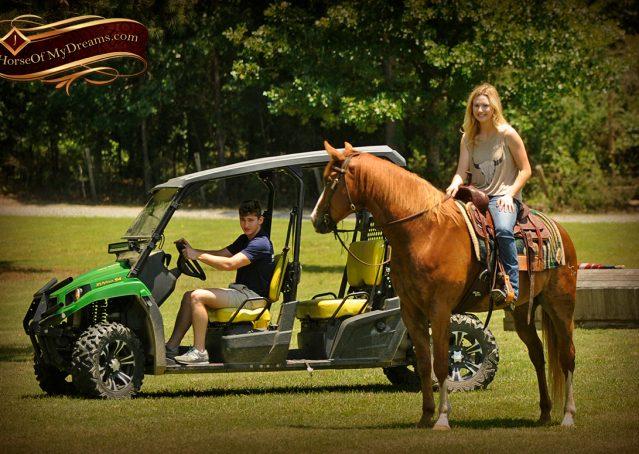 019-Remi-Sorrel-Quarter-Horse_Gelding-For-Sale