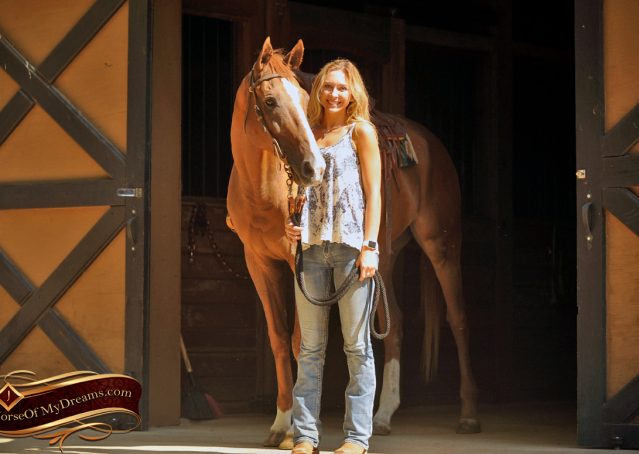 020-Jasper-Chestnut-Apendix-Gelding-For-Sale