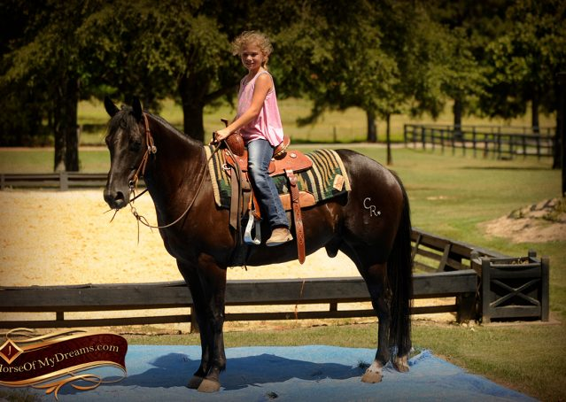 021-Jett-Black-Quarter-Horse-Gelding-For-Sale
