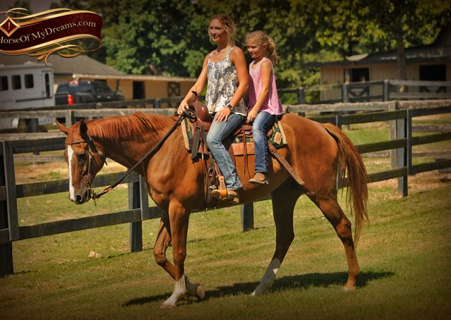 024-Jasper-Chestnut-Apendix-Gelding-For-Sale