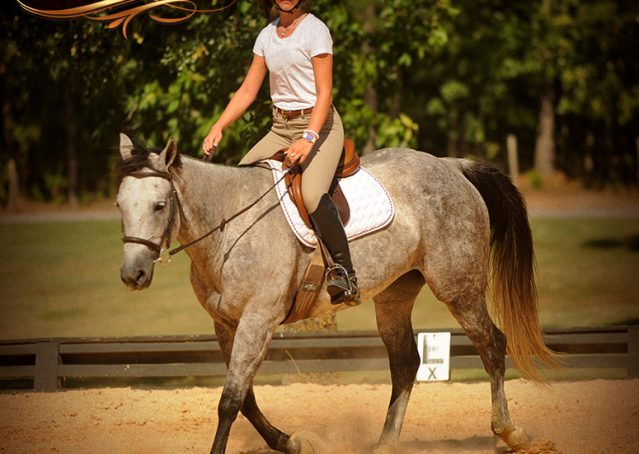 024-Milagro-Gray-AQHA-Gelding-For-Sale