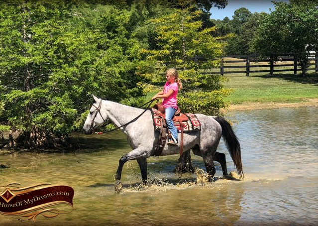 025-Milagro-Gray-AQHA-Gelding-For-Sale