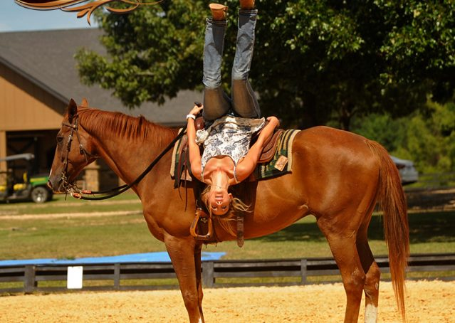 027-Jasper-Chestnut-Apendix-Gelding-For-Sale
