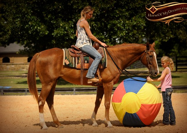 030-Jasper-Chestnut-Apendix-Gelding-For-Sale