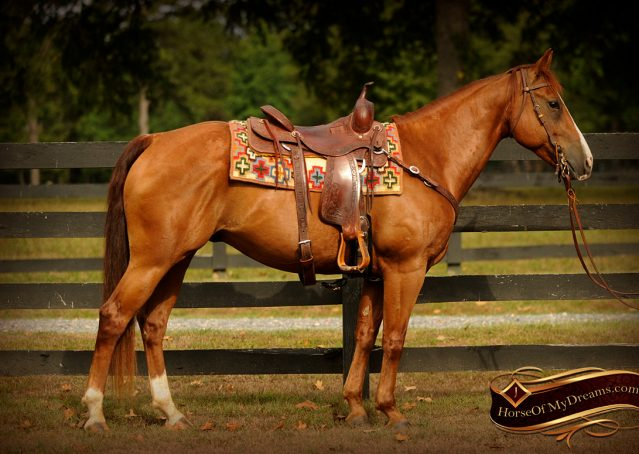 001-Cruz-Sorrel-AQHA-Gelding-For-Sale