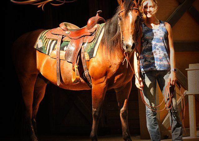 001-Indie-Bay-Quarter-Horse-Gelding-For-Sale