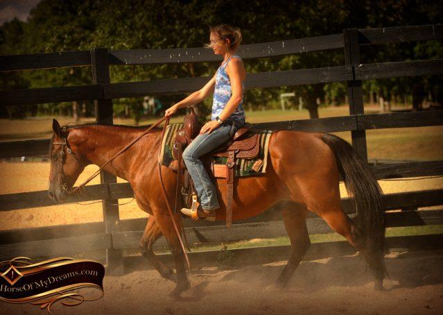 002-Indie-Bay-Quarter-Horse-Gelding-For-Sale