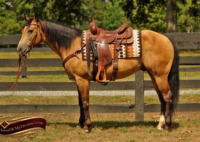 002-Murphy-Buckskin-Quarter-Horse-Gelding-For-Sale