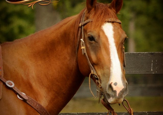 003-Cruz-Sorrel-AQHA-Gelding-For-Sale