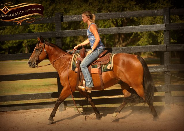 003-Indie-Bay-Quarter-Horse-Gelding-For-Sale