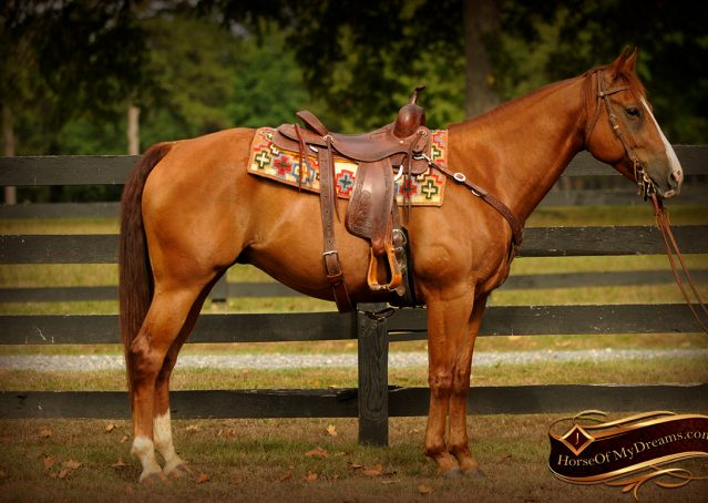 004-Cruz-Sorrel-AQHA-Gelding-For-Sale