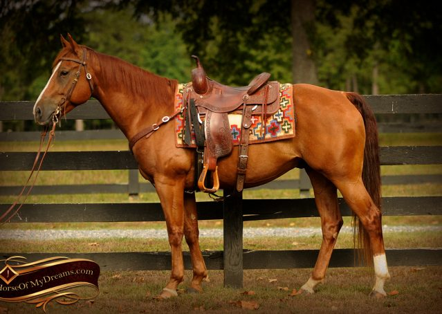 005-Cruz-Sorrel-AQHA-Gelding-For-Sale