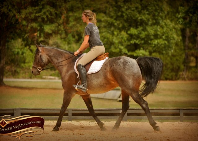 005-Harley-Blue-Roan-AQHA-Gelding-For-Sale