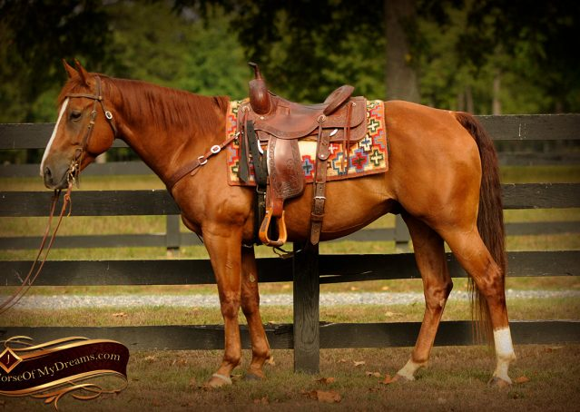 006-Cruz-Sorrel-AQHA-Gelding-For-Sale