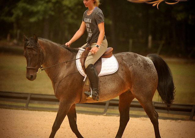 006-Harley-Blue-Roan-AQHA-Gelding-For-Sale