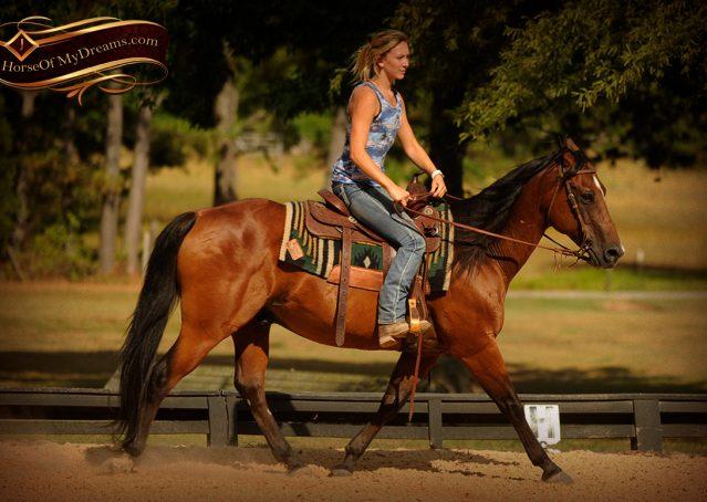 006-Indie-Bay-Quarter-Horse-Gelding-For-Sale