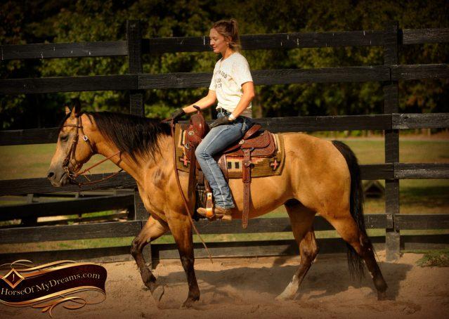 006-Murphy-Buckskin-Quarter-Horse-Gelding-For-Sale