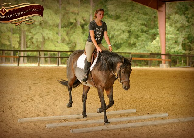007-Harley-Blue-Roan-AQHA-Gelding-For-Sale