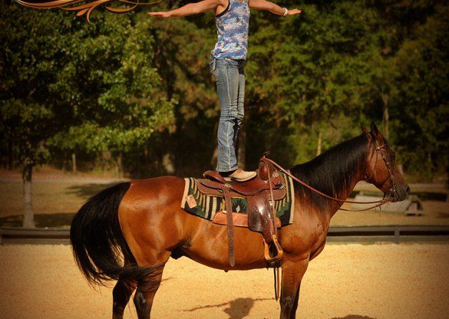 007-Indie-Bay-Quarter-Horse-Gelding-For-Sale