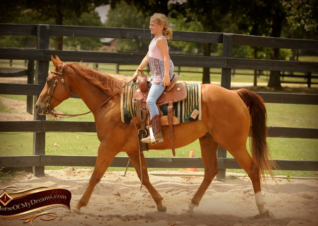 008-Cruz-Sorrel-AQHA-Gelding-For-Sale