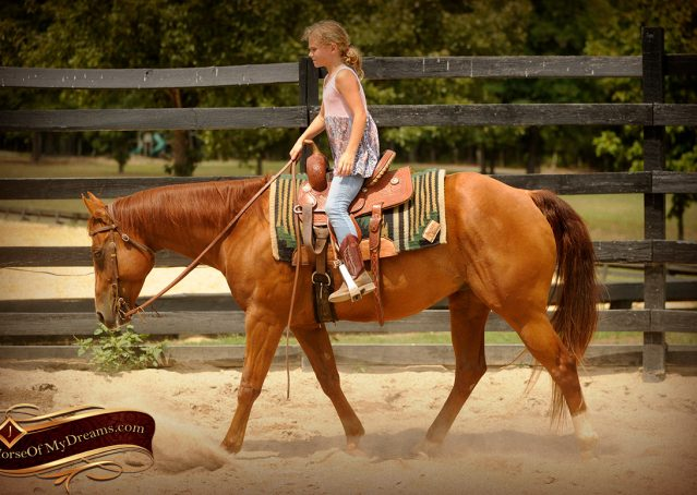 009-Cruz-Sorrel-AQHA-Gelding-For-Sale