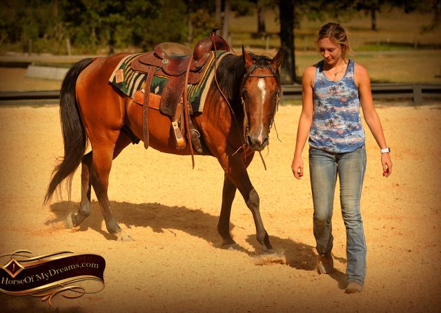 009-Indie-Bay-Quarter-Horse-Gelding-For-Sale