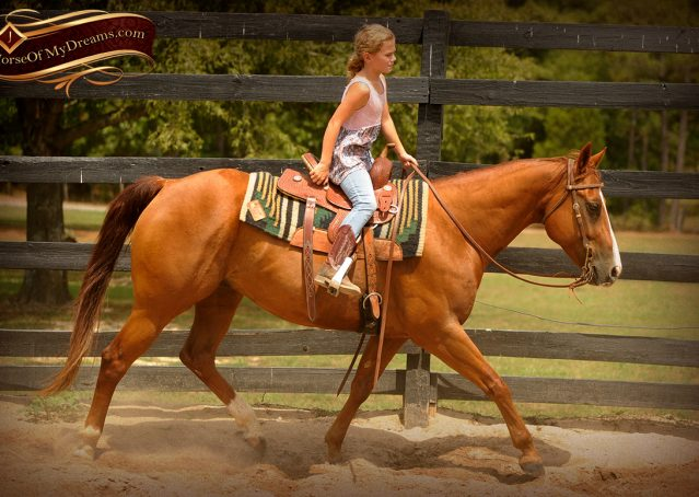 010-Cruz-Sorrel-AQHA-Gelding-For-Sale