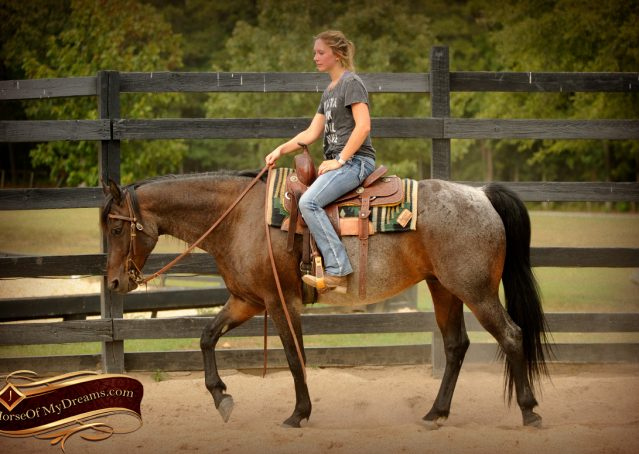 010-Harley-Blue-Roan-AQHA-Gelding-For-Sale